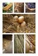 Ferme, campagne, agriculture, paysan, agricole, rustique
