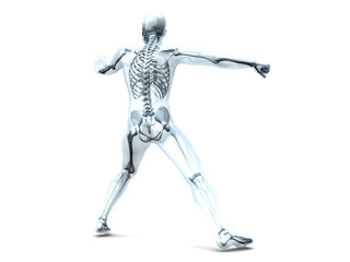 Anatomie - Kampfsport