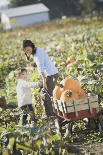 Asian sisters pulling wagon through pumpkin patch
