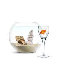Poisson Rouge - Aquarium - Projet Immobilier
