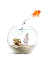 Poisson Rouge - Aquarium - Motivation