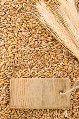 wheat grain and spike ear