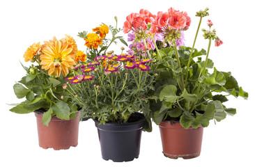 verschiedene Frühlingsblumen, freigestellt auf Weiß