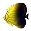 3d render of tropical fish