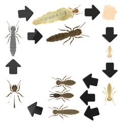 3d render of termite animals