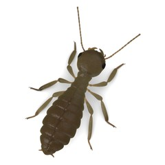3d render of termite workers