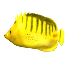 3d render of tropical fish