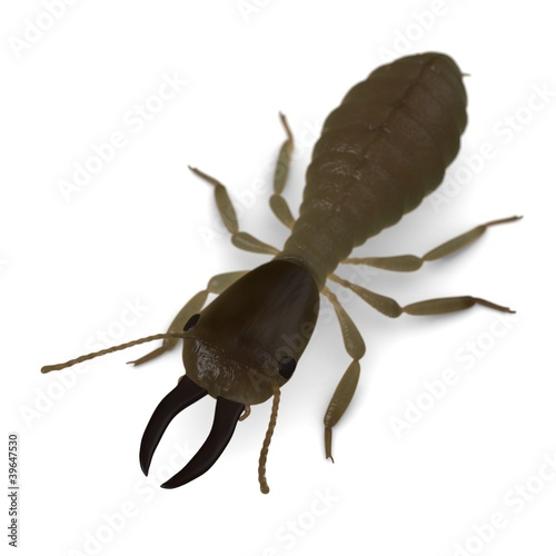3d render of termite soldier