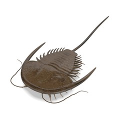 3d render of trilobite animal