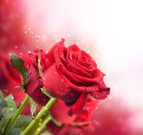 Fototapety background with red roses
