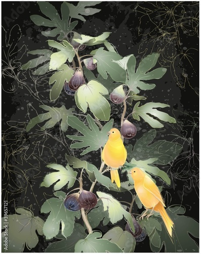 Illustration of canaries sitting on a fig tree.