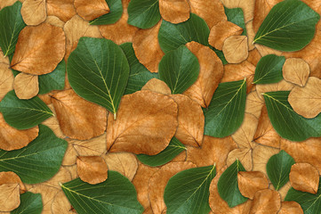 Green and dry leaf background
