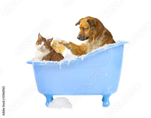 canvas print picture Katzenwäsche, Hund und Katze in der Badewanne