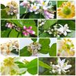 mosaïque de fleurs d'agrumes