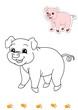 animali da colorare, maiale