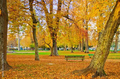 jesien-w-parku-miejskim