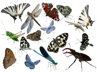 Butterflies of a dragonfly bugs insects it is isolated