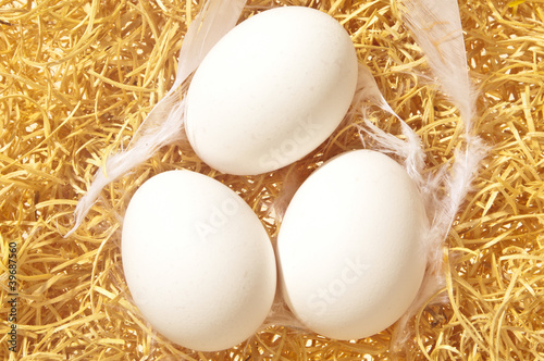 fresh white eggs