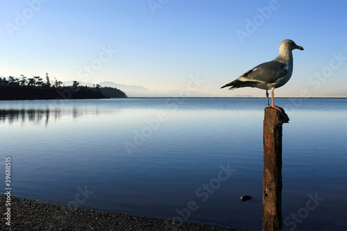 Seagull by the Sea 6