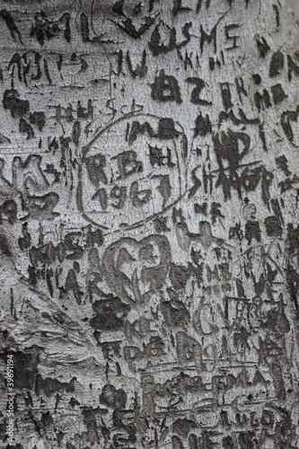 Poster Liebesbaum im Botanischen Garten Jena