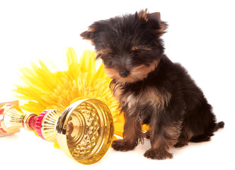puppy about a yellow flower, isolated