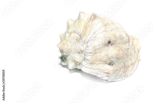 scene seashell as illustration type sea fauna