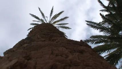 Palmeras Marruecos