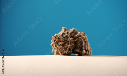 shells on beach sand with room for copy or text