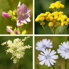 Heilpflanzen Collage