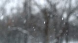 Falling Snow Over Forest Background