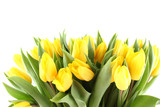 Fototapety Tulips Bouquet isolated on white