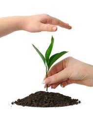 Hand putting a plant in heap earth and a children's hand coverin