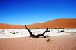 Namibia Dead Vley