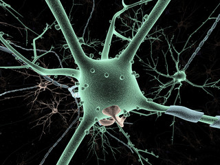 Neuron long-shot