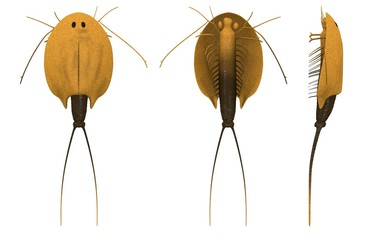 3d render of triops cancriformis