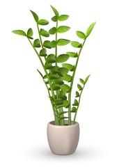 3d render of zamioculcas plant