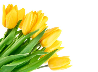 bouquet of yellow tulip flowers isolated on white background