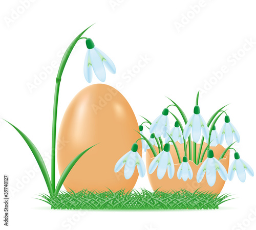 snowdrops are in egg shell vector illustration
