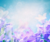Fototapety Campanula floral background