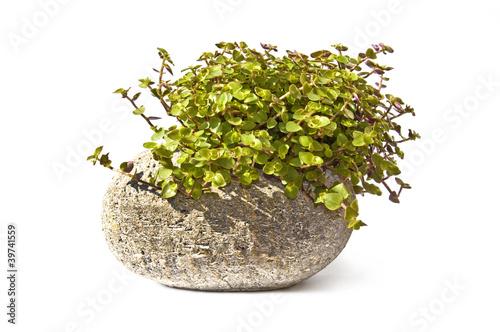 Plante verte dans une pierre fond blanc photo libre de for Acheter une plante verte