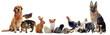 groupe d'animaux domestiques