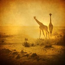 vintage image of giraffes in amboseli national park, kenya