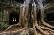 Tree roots envelop Ta Prohm temple Angkor