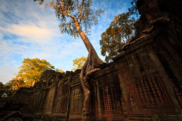 Tree grows on Angkor temple wall