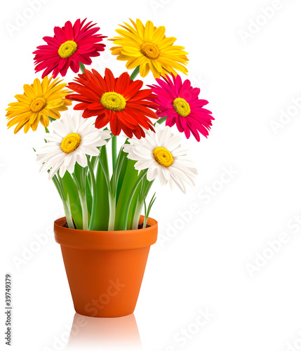 Fresh spring color flowers  Vector illustration