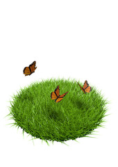 papillons herbe