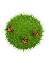 nature papillons
