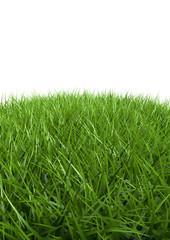 herbes détouré
