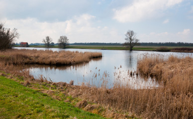 Colorful view at the Dutch National Park De Biesbosch