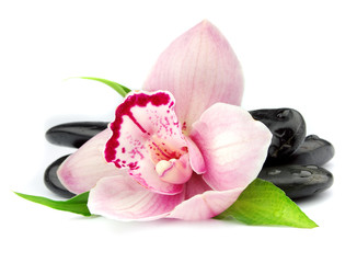 Orchid on the black stones